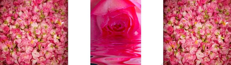 Pure Rose Water:Behnaz Sarafpour:The Fashion Informer