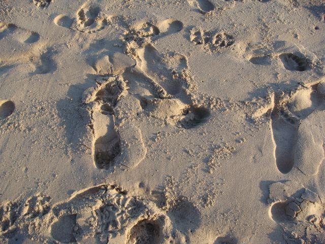 Montauk footprints:The Fashion Informer
