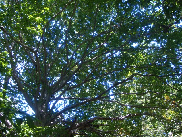 Tree:The Fashion Informer