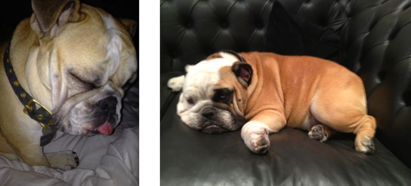 5a. MatzaBall and Lox:Kimberly Ovtiz's dogs