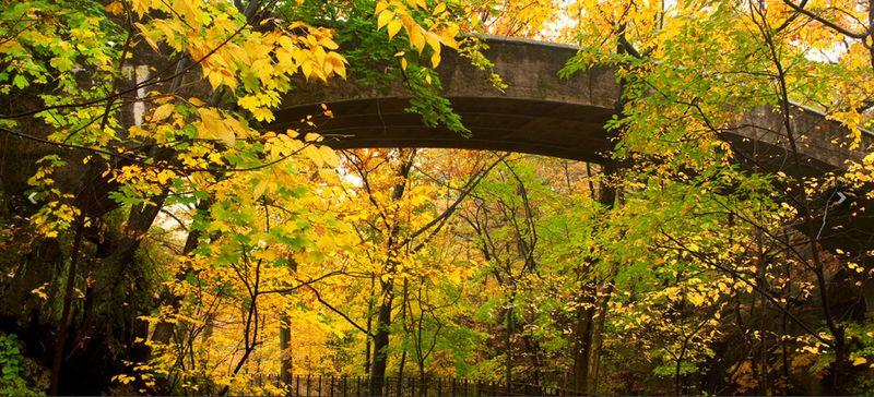 Bridge at NY Botanical Garden